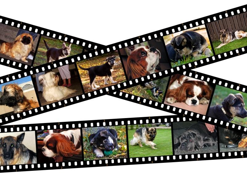 4412451-canine-filmstrip-illustration